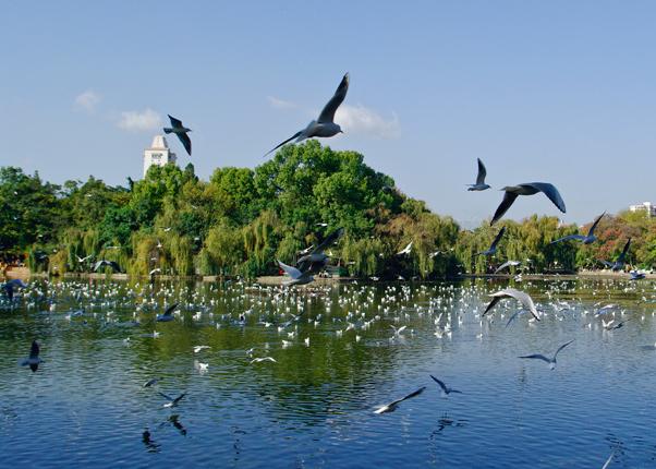 Kunming Green Lake Park - Highlights Attraction in Kunming