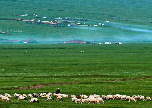 Qinghai Grassland