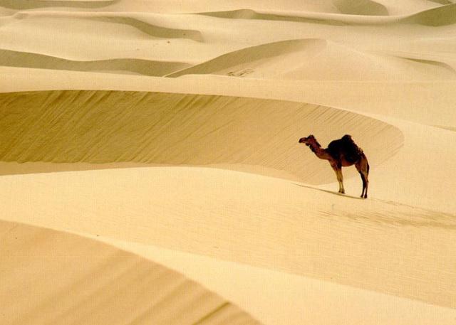 Xinjiang Desert - Silk Road Discovery