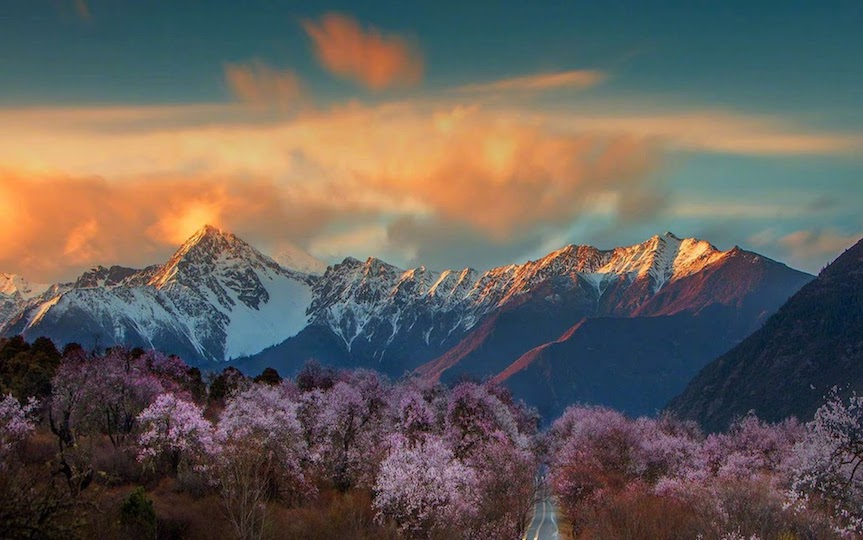 Snow mountains and peach flowers Nyingchi