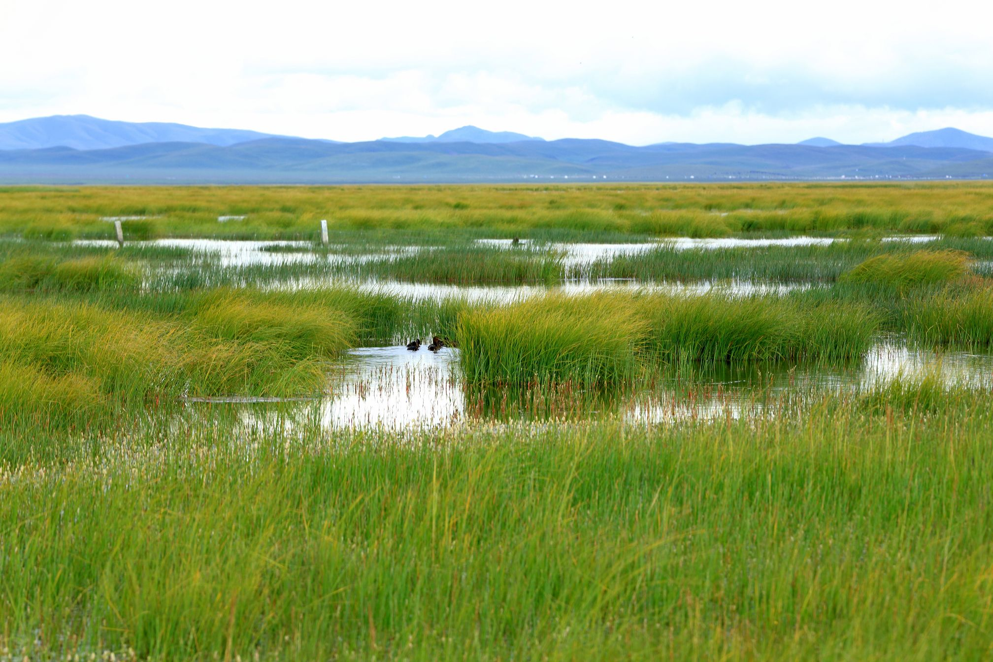 The Charming Grassland In Aba Prefecture