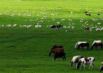 Haidong Grassland