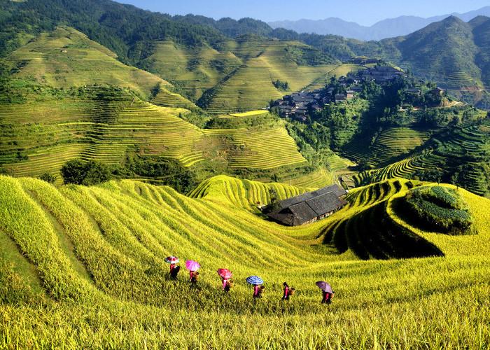 Guizhou Longji Rice Terraces