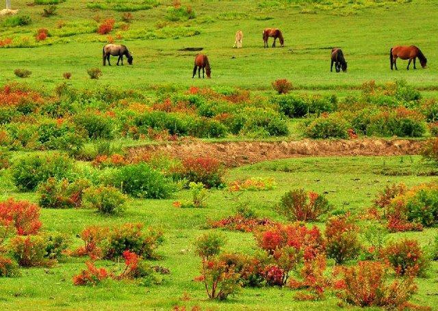 Shangri-la Napahai Nature Reserve