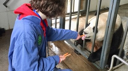 feeding pandas during the volunteering work in Dujiangyan