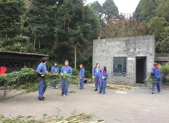 dujiangyan panda volunteering work includes carrying bamboo and preparing food