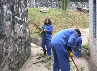 dujiangyan panda volunteering work includes cleaning panda rooms