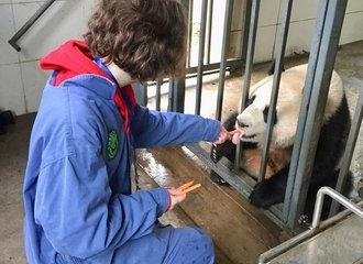 Feed pandas at Dujiangyan Panda volunteering work
