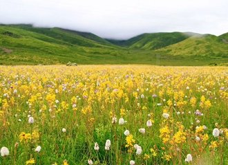 litang grassland in summer season