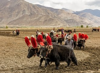 Farming along way to EBC from Shigatse