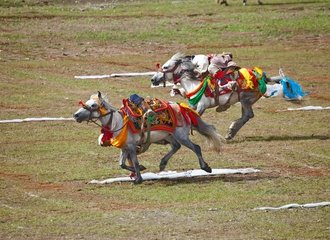 Horse race in Nagchu