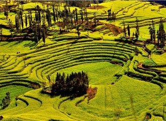 Yunnan Photography Tour to Luoping Rapeseed Flowers Fileds