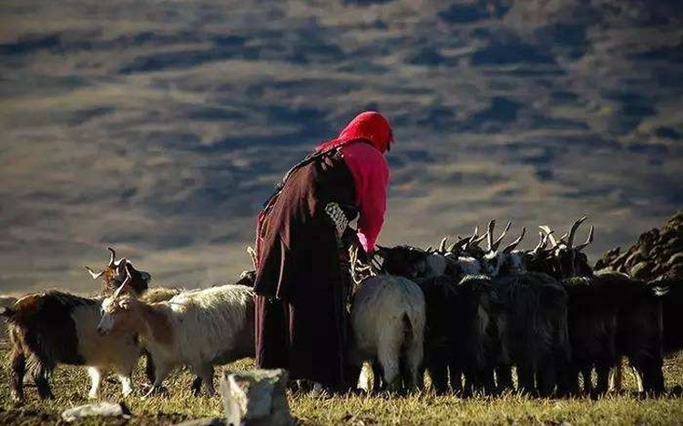 Herder along the way