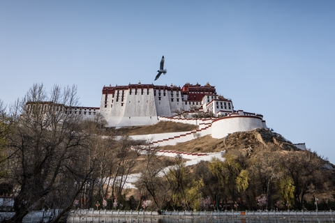 Lhasa potala palace and bird