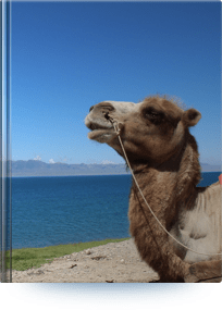 Silk Road Travel Tips