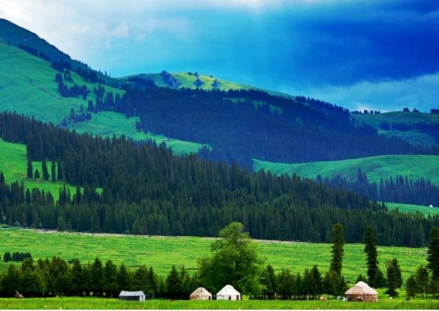 Ili Grassland in Summer