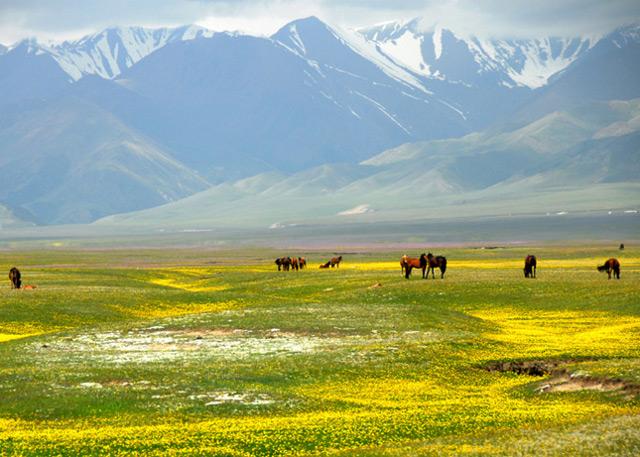 Xinjiang Tashkorgan Grassland