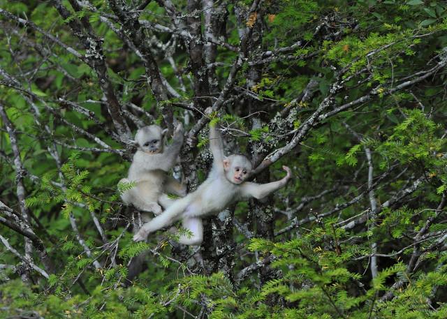 Yunnan Tacheng Monkey Reserve