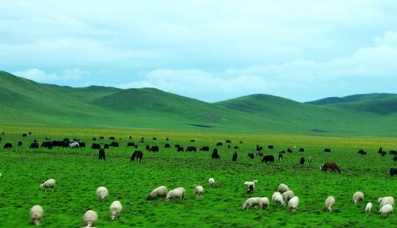 Sichuan Attractions - Fertile Zoige Grassland